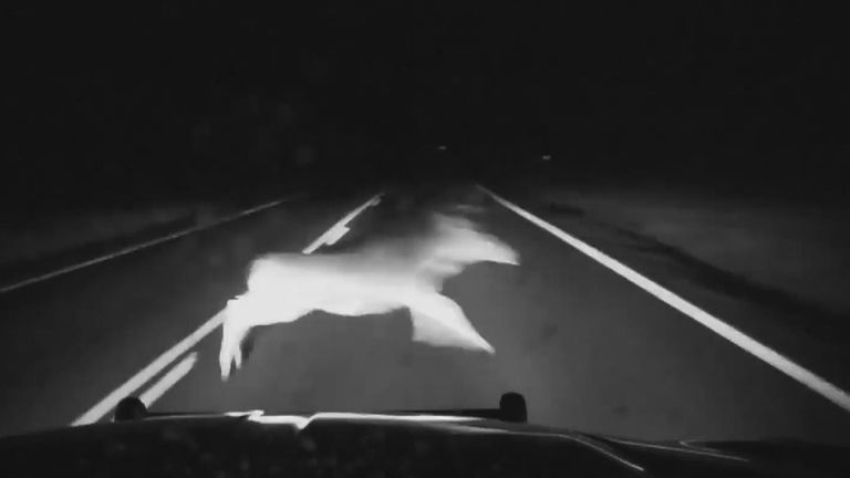 US police deputies had to near misses with deer, warning drivers to keep watchful for unexpected encounters while driving
