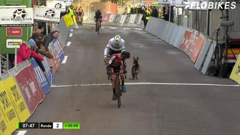 The dog was eventually caught and neither the riders, nor the dog were injured during the incident.