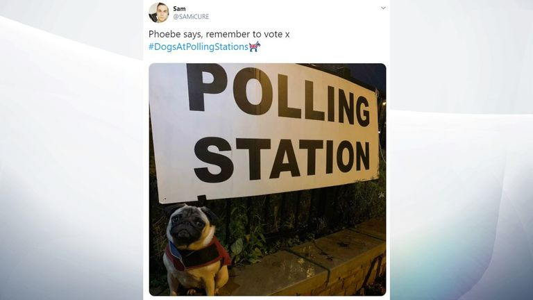 Phoebe the pug was up early to help her owner vote. Pic: SAMiCURE