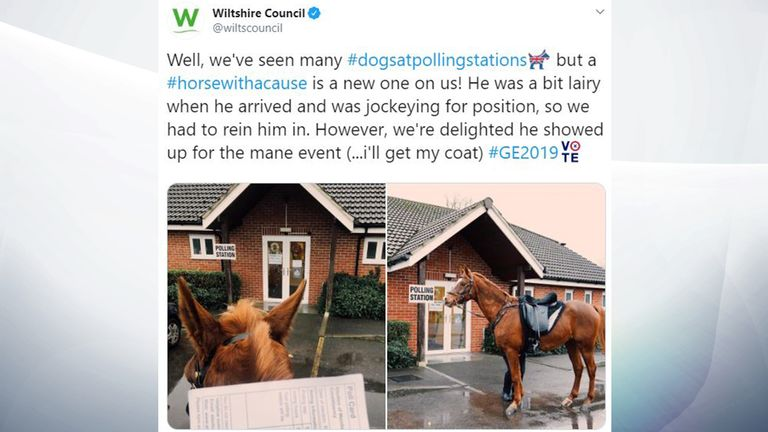 For this four-legged friend, the election has been a one horse race. Pic: @wiltscouncil