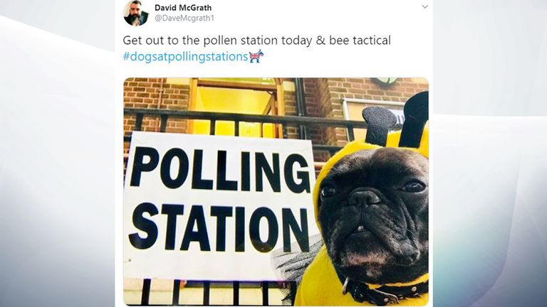 This dog went the extra mile to sweeten the vote. Pic: David McGrath