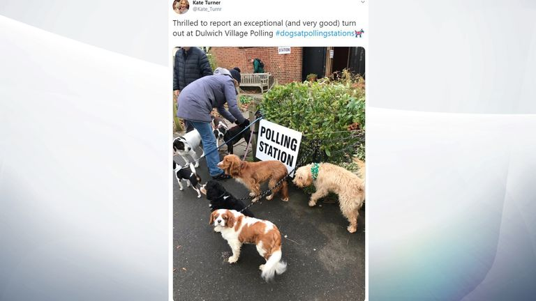 Many, many dogs spotted in Dulwich, south London. Pic: @Kate_Turnr