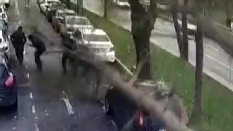 Tree falling on street