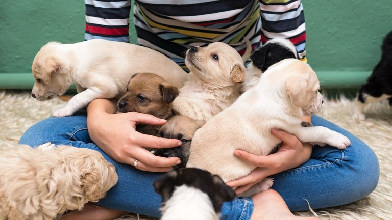 People may have become ill after stroking pet store puppies