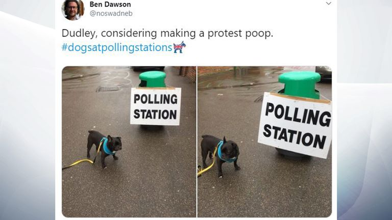 Not all dogs were enthusiastic about the voting options. Pic: @nowswadneb