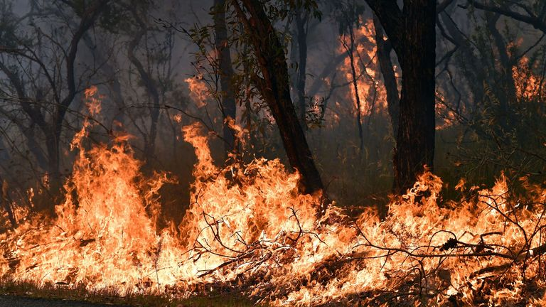 Flames from back burning measures, used to secure residential areas from encroaching bushfires, are seen at the Mangrove area in Central Coast, some 90-110 kilometres north of Sydney on 7 December 2019