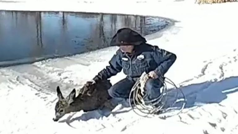 A sheriff's deputy lassoed a deer and pulled it to safety after it fell into a pond covered partially in ice.