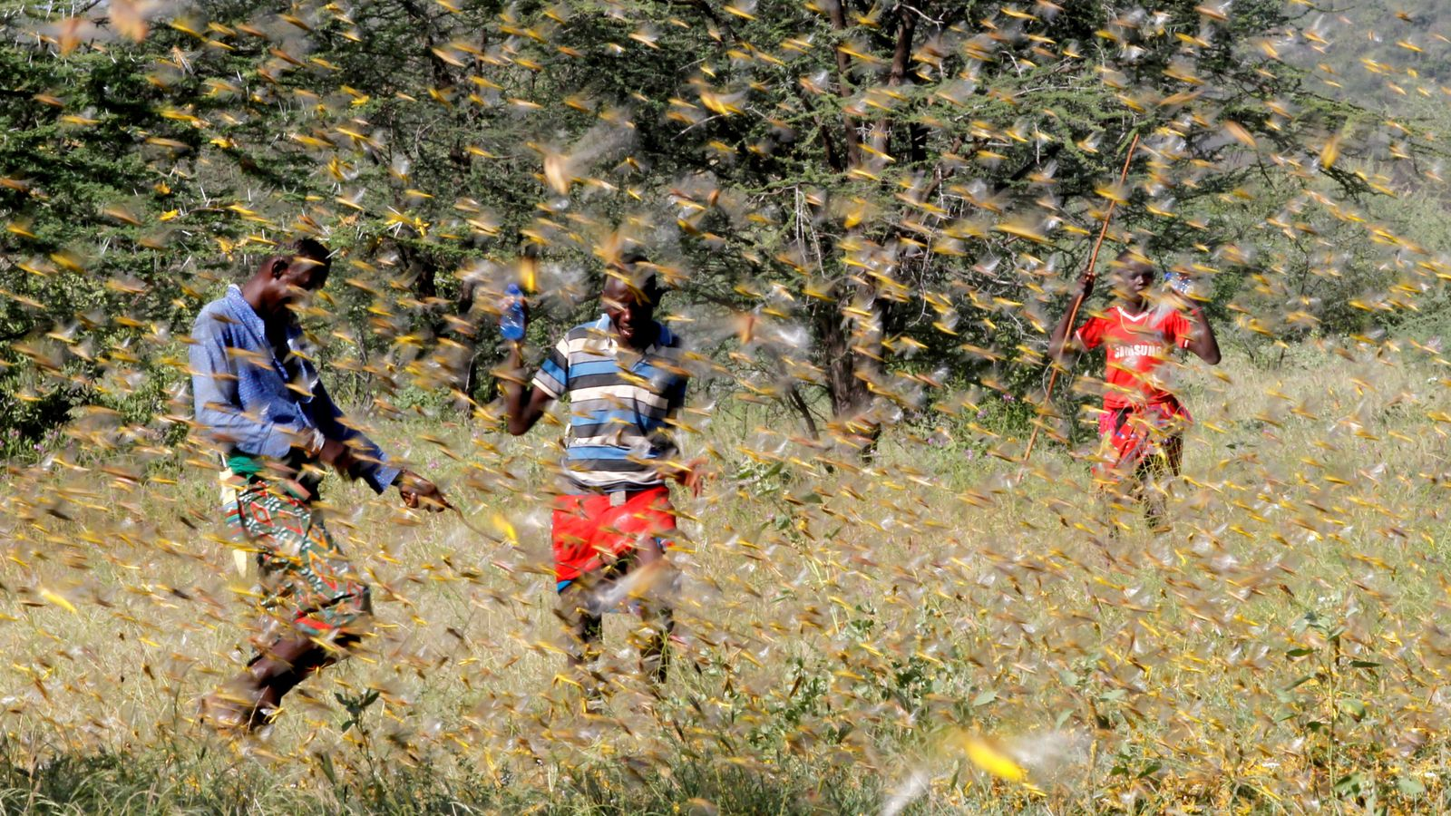 Grasshopper swarms: UN says 13 million individuals in East Africa could confront nourishment emergency