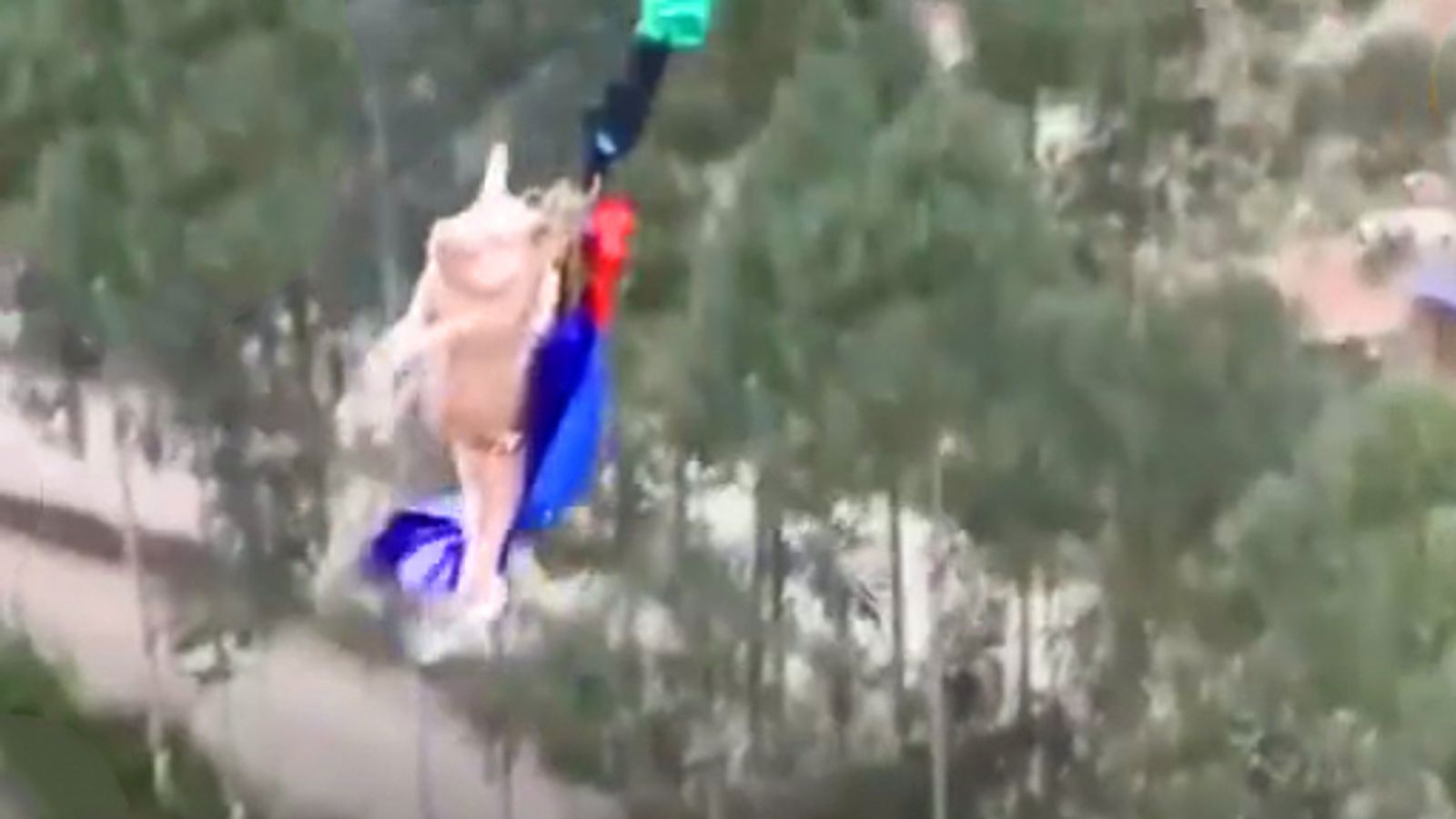 Pig forced to bungee jump in 'disgusting' theme park stunt