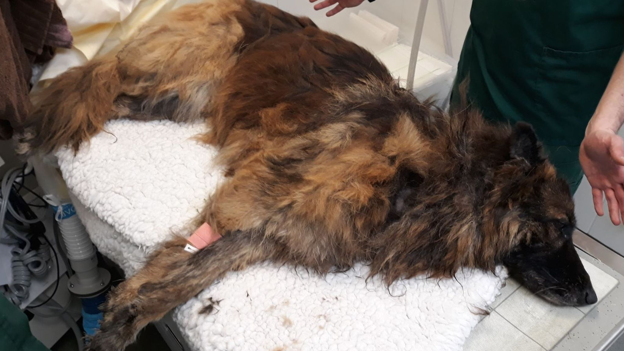Drowning dog tied to heavy rock rescued from river - man and woman arrested