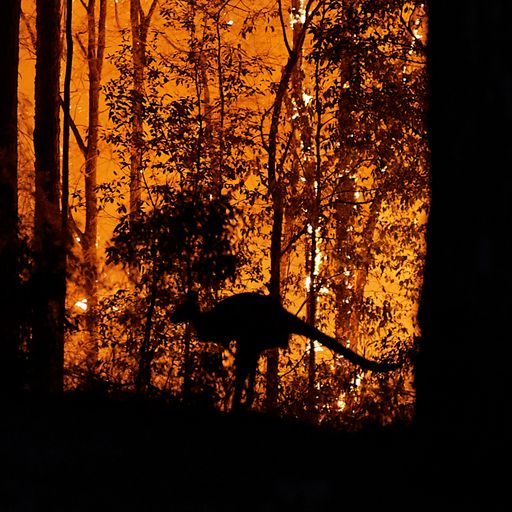 Summer of fear: Australia's bushfires in pictures