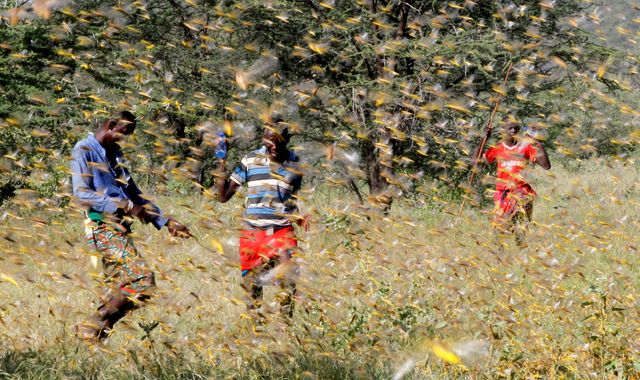East Africa: Worst locust swarms in 25 years could worsen food crisis