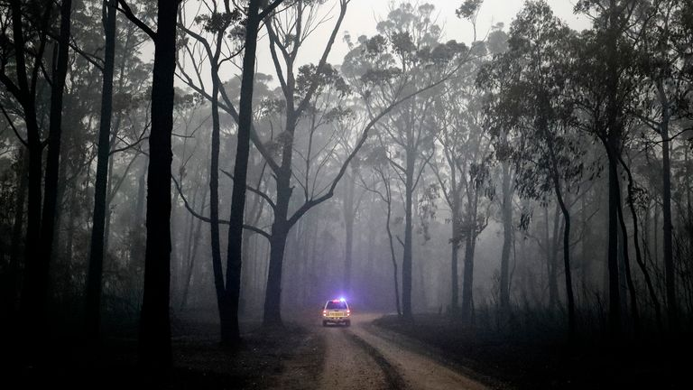 Crews inspect a burnt-out forest in Victoria