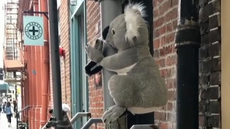 Toy koalas were placed around the streets of New York City to raise money for wildlife rescuers and carers in Australia.