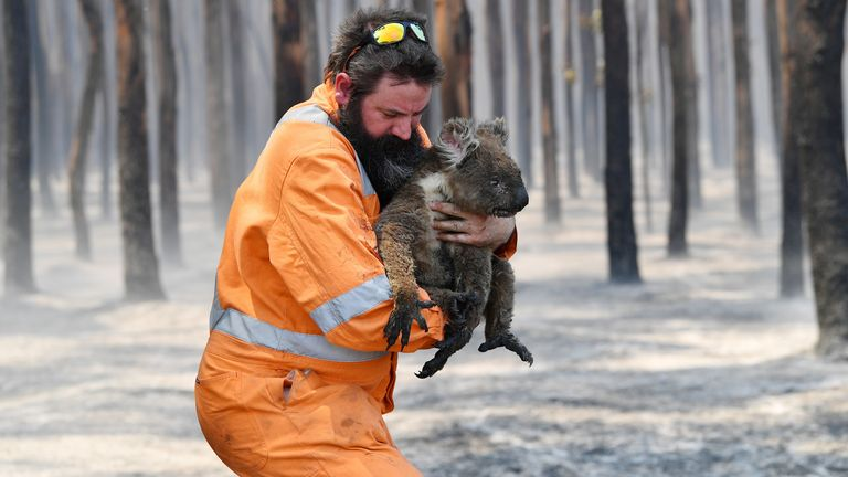 A wildlife rescuer is seen with a koala rescued at a burning forest near Cape Borda on Kangaroo Island, southwest of Adelaide
