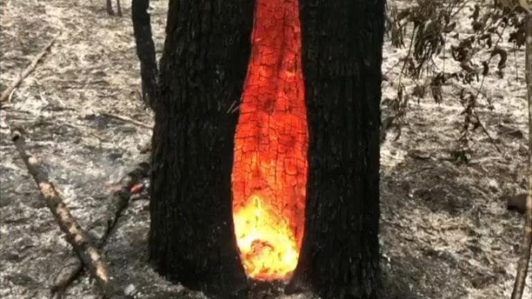 Fire burns on inside tree after larger blaze stops in New South Wales