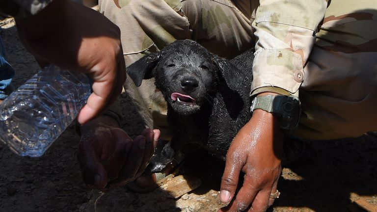 Rescuers wash a puppy they found alive under the rubble