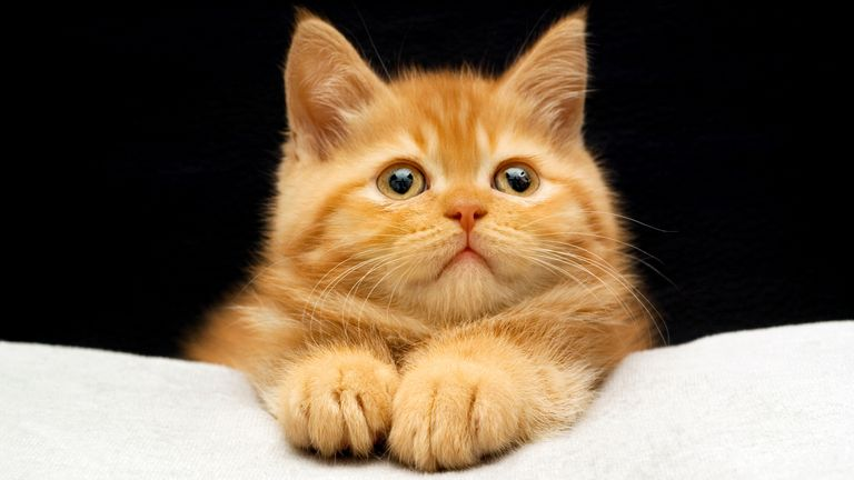 Cat lovers less likely to go to church, research suggests