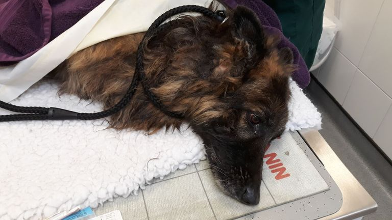 The dog was dragged to safety. Pic: @nottspolice