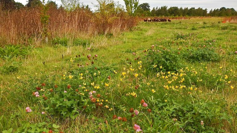 The Woodmeadow Trust has turned turned a barley field into a mix of woodland and meadow