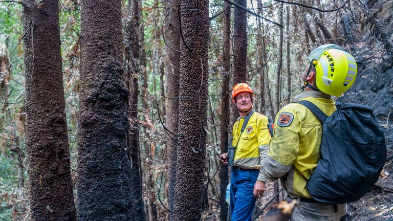 The NSW National Parks and Wildlife Service and NSW Rural Fire Service undertook the difficult challenge. Pic: NSW Government, Australia