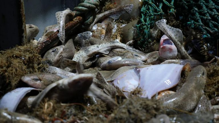 The UK fishing industry has suffered over the years
