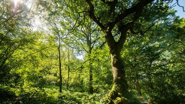 Glyn Davis Wood in Warwickshire is among the areas under threat