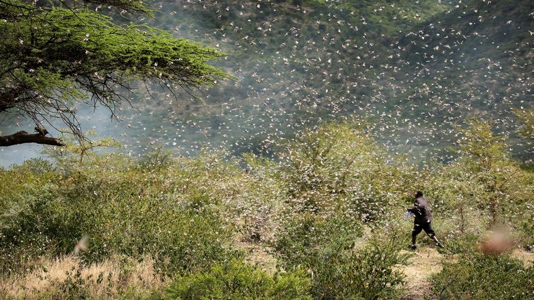 Locusts in Kenya