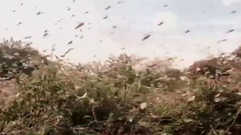 Kenya is experiencing is worst locust infestation in more than 70 years