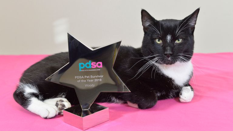 PDSA Pet Survivor of the Year 2019 - Woody the cat