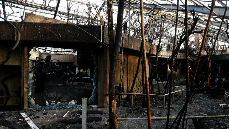 Only two chimpanzees - Bally and Limbo - survived the fire at Krefeld Zoo