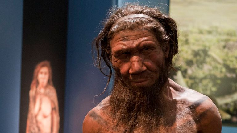 Neanderthals are an extinct subspecies of human