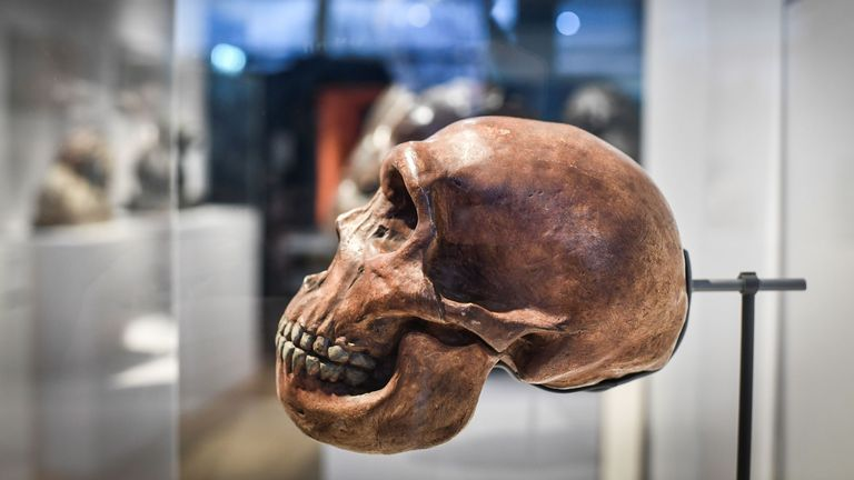 A Neanderthal skull displayed at a museum in Paris