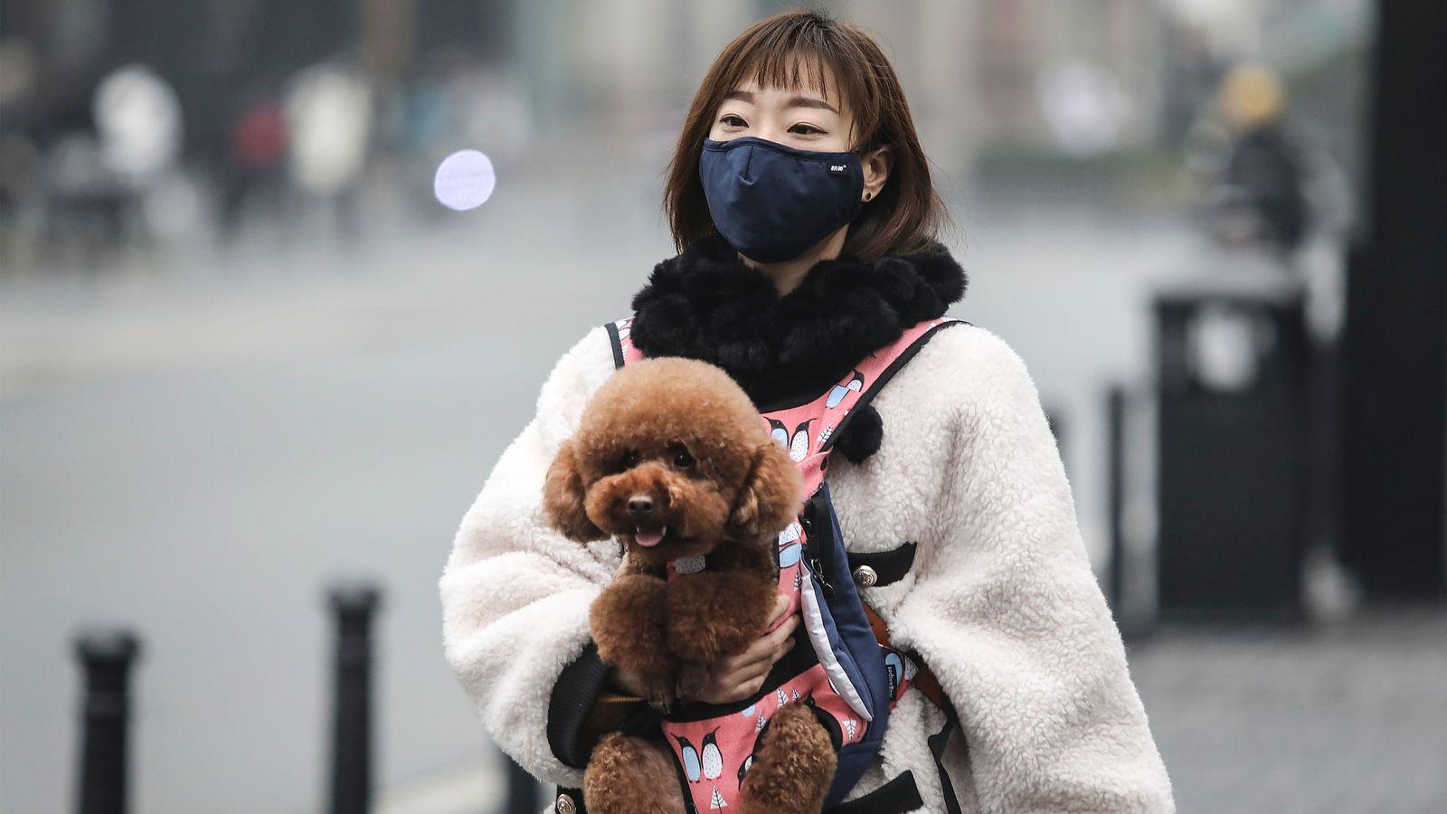 Organisasi Kesehatan Dunia telah mengkonfirmasi tidak ada bukti bahwa anjing peliharaan atau kucing dapat terinfeksi virus.