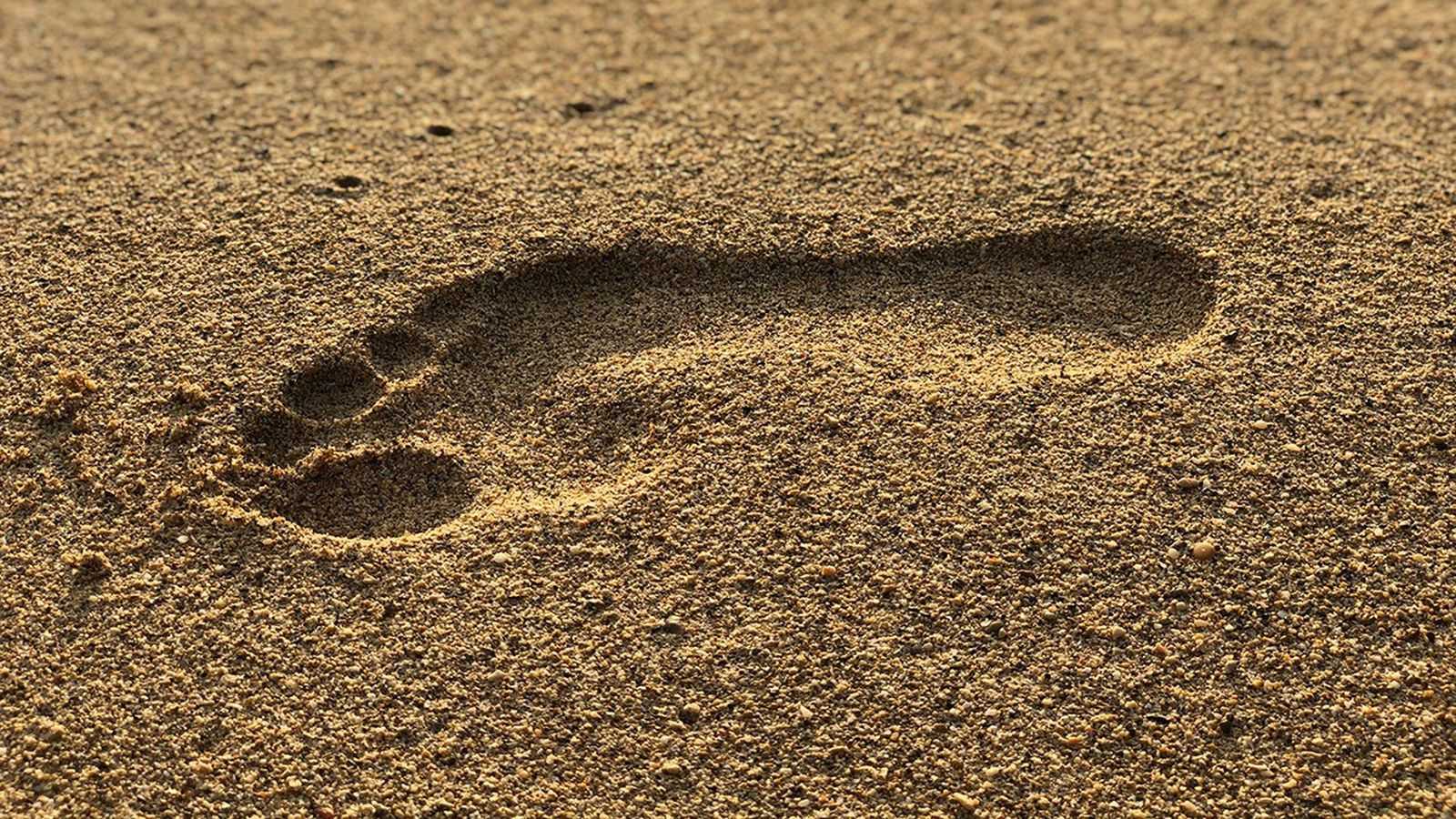 Human feet developed arches 3.5 million years ago - a 'key step' in evolution