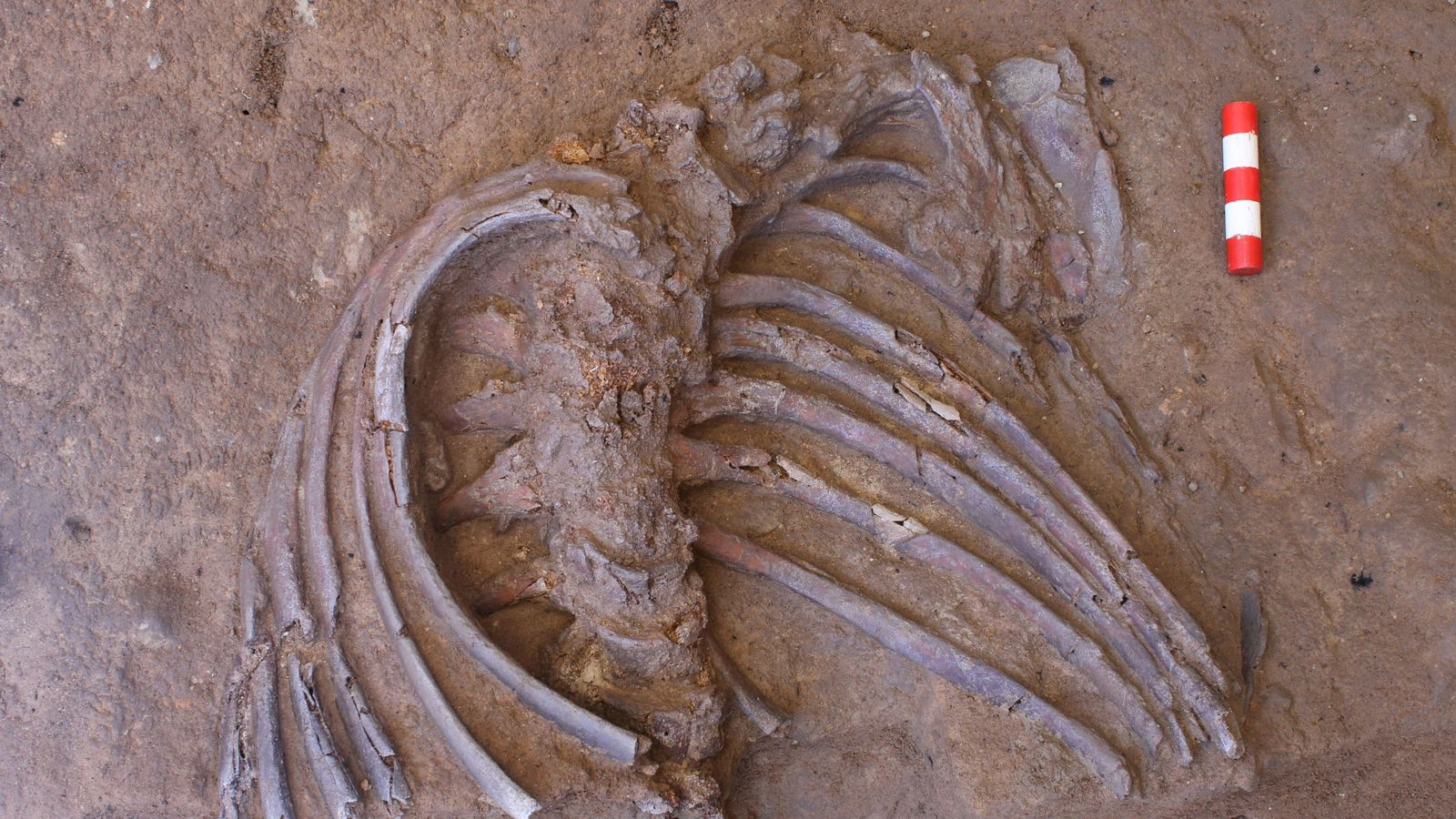 Neanderthal skeleton suggests species carried out funeral rites with flowers