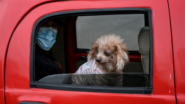 A man wearing a facemask sits in a car with his dog in Beijing on February 1, 2020. - China faced deepening isolation over its coronavirus epidemic as the death toll soared to 259, with the United States and Australia leading a growing list of nations to impose extraordinary Chinese travel bans. (Photo by NOEL CELIS / AFP) (Photo by NOEL CELIS/AFP via Getty Images)
