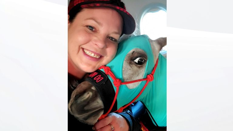 Passengers stunned as miniature horse travels in first class cabin