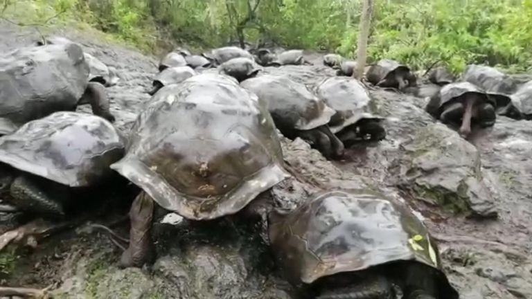 Conservationists found 30 giant tortoises at the bottom of a volcano