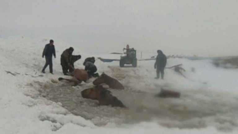 Russian farmer shared dramatic footage on social media showing the rescue of 11 female horses that became trapped in an ice hole on a river in Russia's South Ural's Bashkiria region.