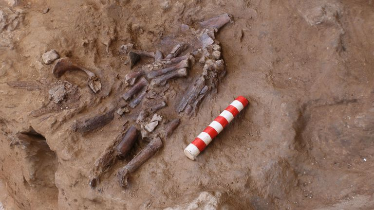 The remains include acrushed but complete skull, the upper chestand both hands