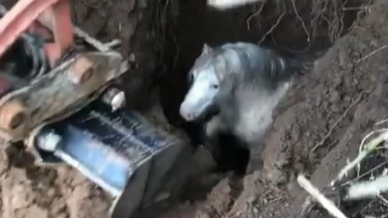 Pony gets rescued from deep hole