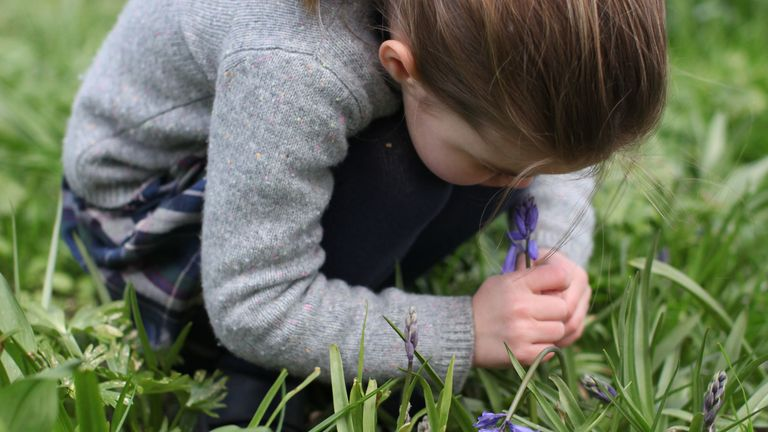 Princess Charlotte smelling a bluebell. Pic: The Duchess of Cambridge