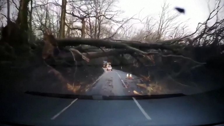 A fallen tree in Sussex has caused a traffic jam after Storm Ciara batters Britain.