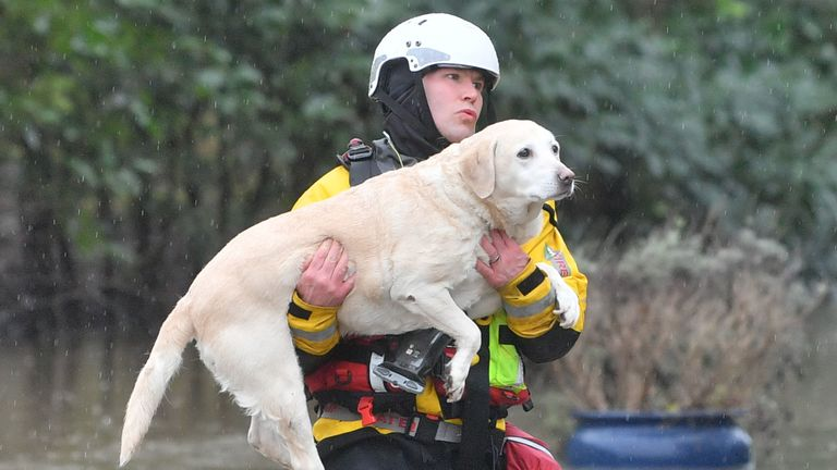 A dog is carried to safety during severe flooding in Nantgarw, Wales