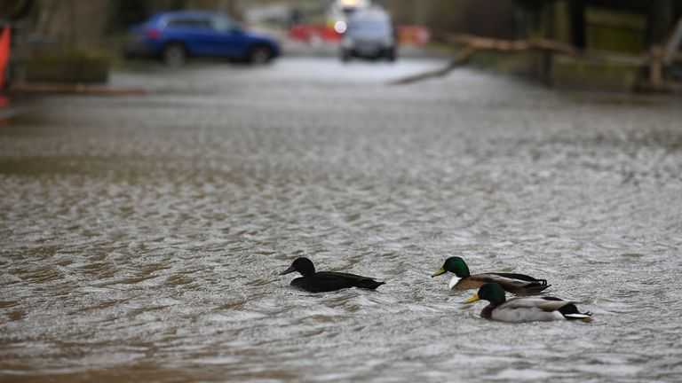 Ducks swimming down a flooded road in Upton-upon-Severn in Worcestershire