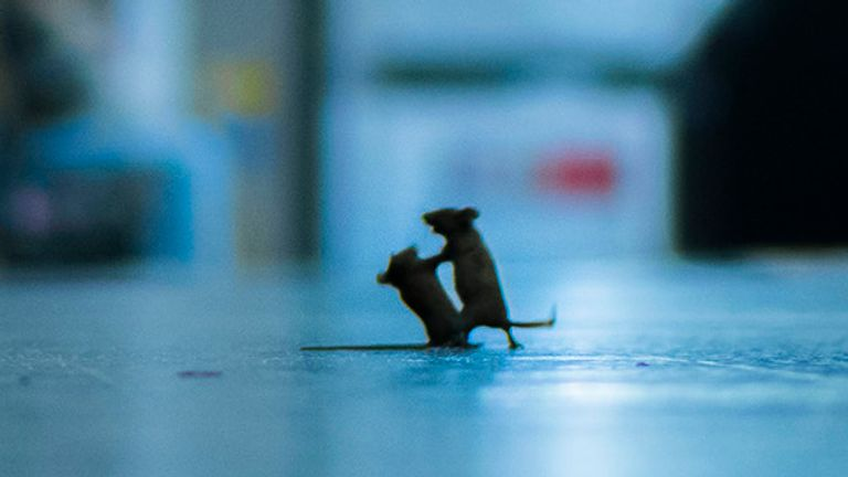 """Station squabble"" shows mice inside a London Underground station. The image was the winner of the LUMIX People's Choice Award at the Wildlife Photographer of the Year competition. Pic: Sam Rowley/Wildlife Photographer of the Year"
