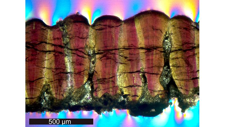 An eggshell cross-section shows mineral growths. Pic: Robin Dawson