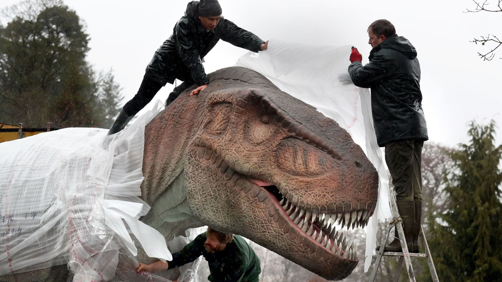 Life-size dinosaurs arrive at safari park to form new exhibition in Stirling | UK News