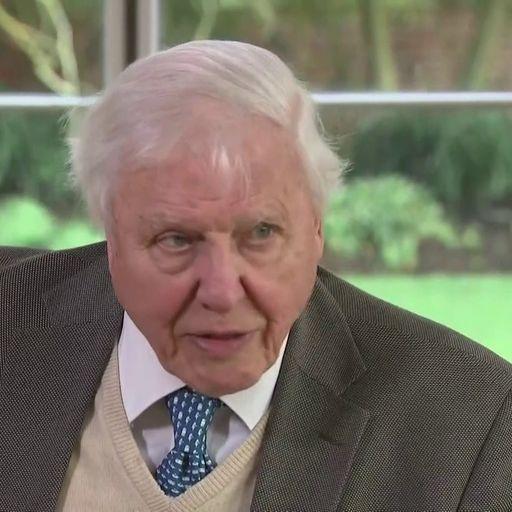 Sir David Attenborough hopes coronavirus crisis will not hinder UK climate change summit